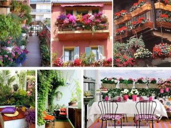 Dārzs uz balkona- tava zaļā oāze