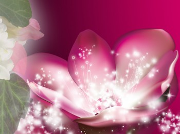 Maģiskais lotosa zieds- iedvesmas un gudrības simbols
