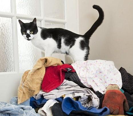 Kaķis- kleptomāns. Neticami, bet fakts