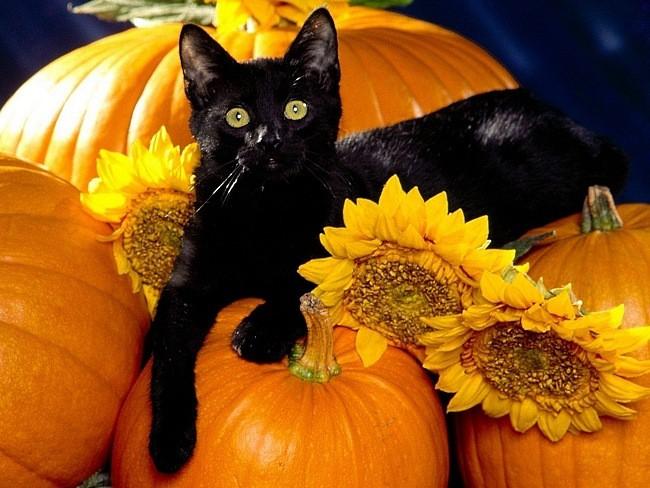 Helovīni jeb visu tumšo spēku nakts no senatnes līdz mūsdienām