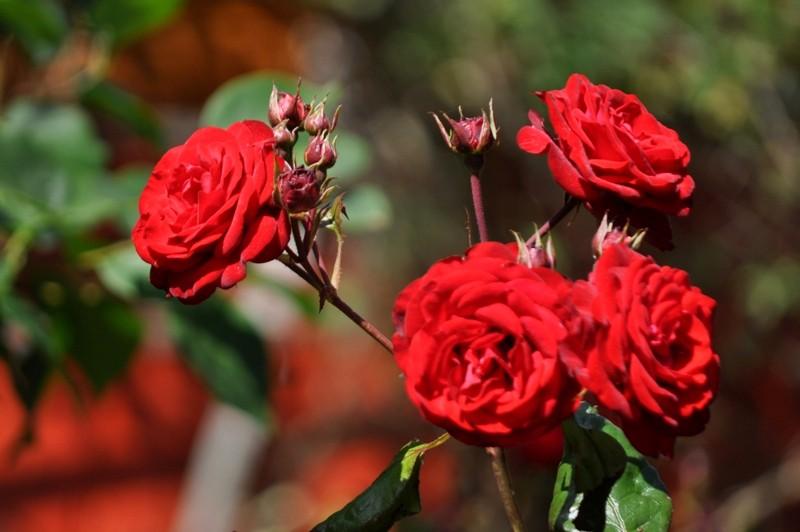 Ar ko īpašs Lauvas dārzs? 12 dārzu maģija
