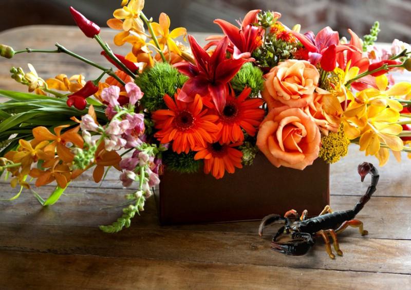 Mazais puķu špikerītis. Kādus ziedus kurai zodiaka zīmei dāvāt?