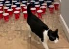 Video: Kaķu mačos dalībniekiem dažādas sekmes