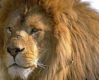 Ko dāvināt Lauvas zīmē dzimušajiem?