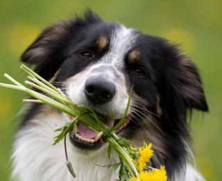 Sievietes visvairāk novērtē suņa paklausību,  bet vīrieši – uzticību