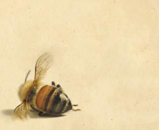"""""""Bišu vēsture"""" – izcils romāns par iespējamu realitāti"""